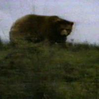 CampAds--Bear